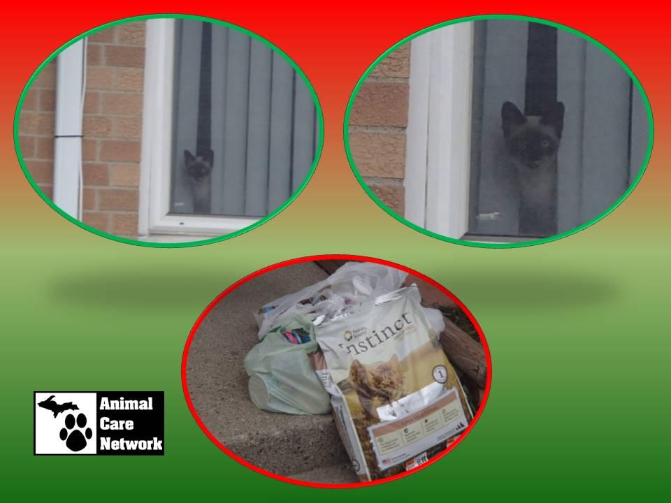 holiday food drops 2 cat