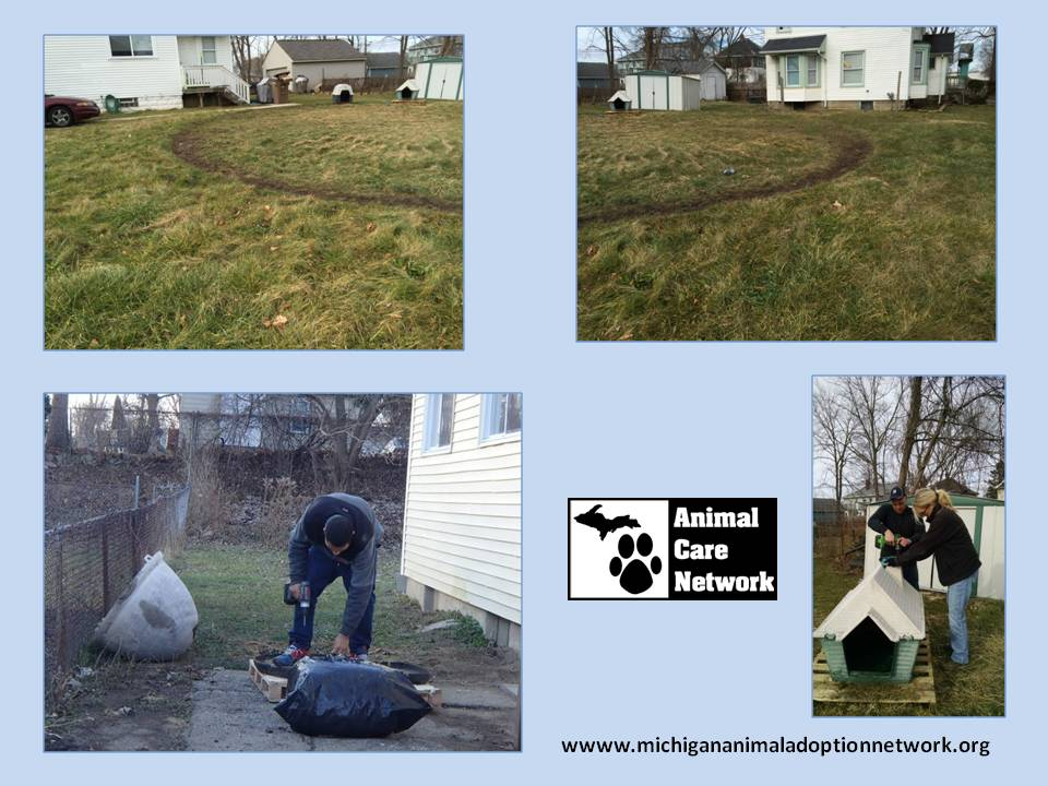 Doghouse repair and wellness