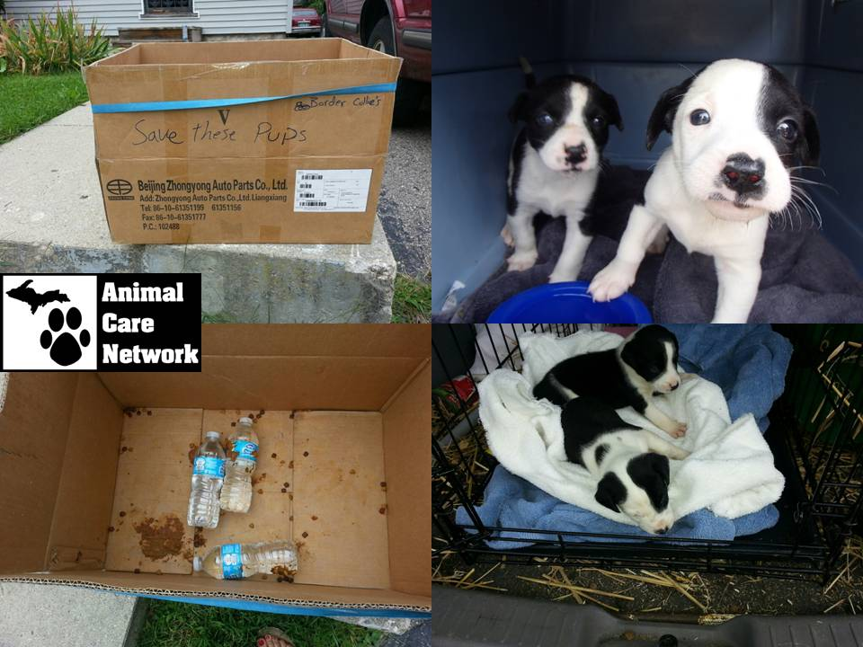 puppies left in box in parking lot