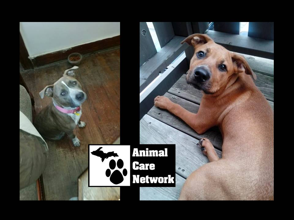 spay and neuter all animals in household