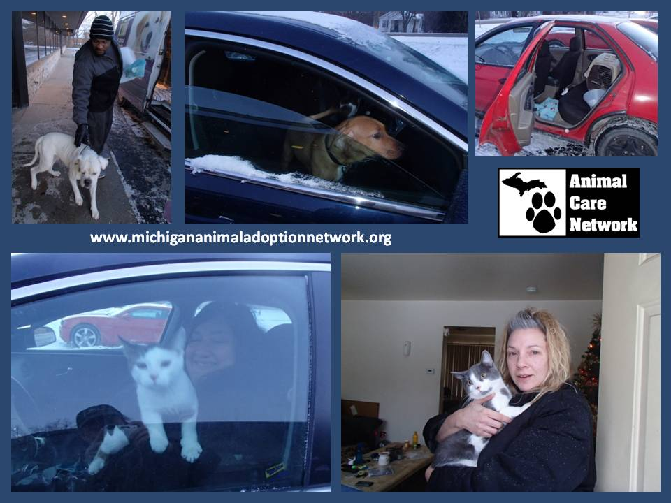 monthly spay neuter transport