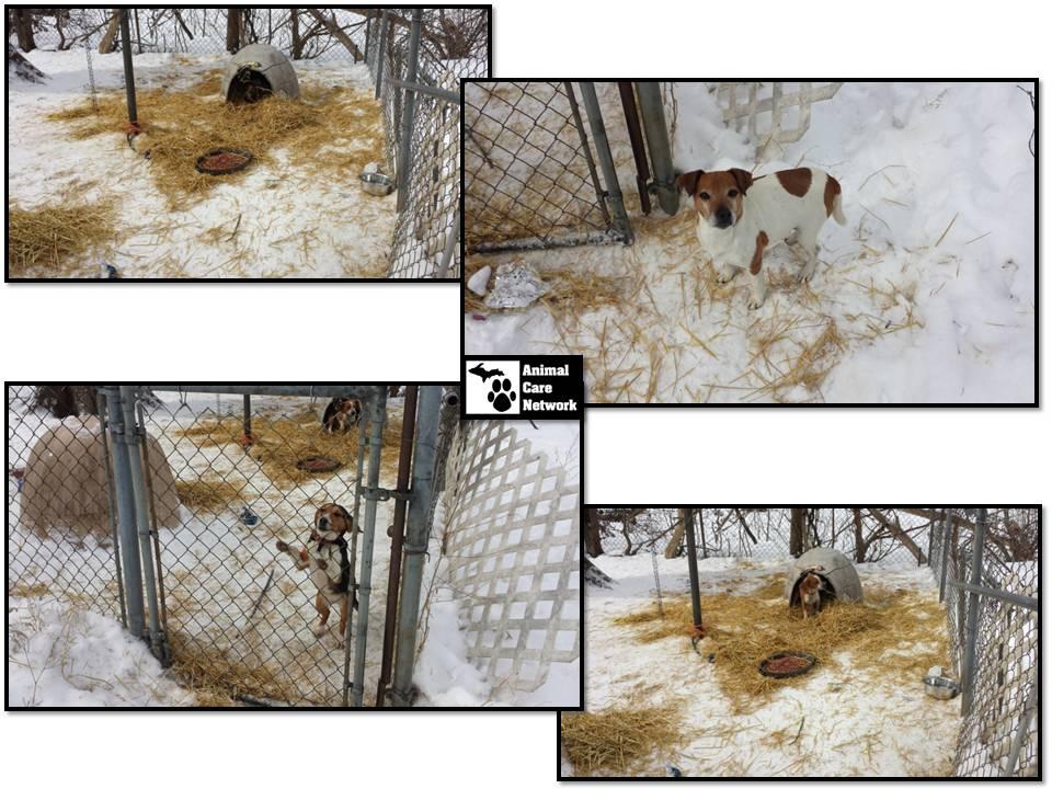 ACN checks the hound dogs