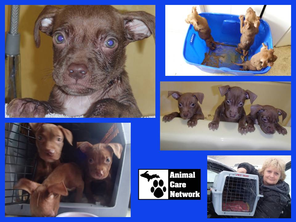 puppies rescued from delorable conditions