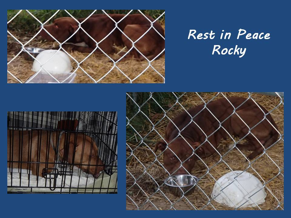 rest in peace rocky