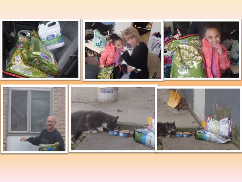 DONATED CAT FOOD 4-2015