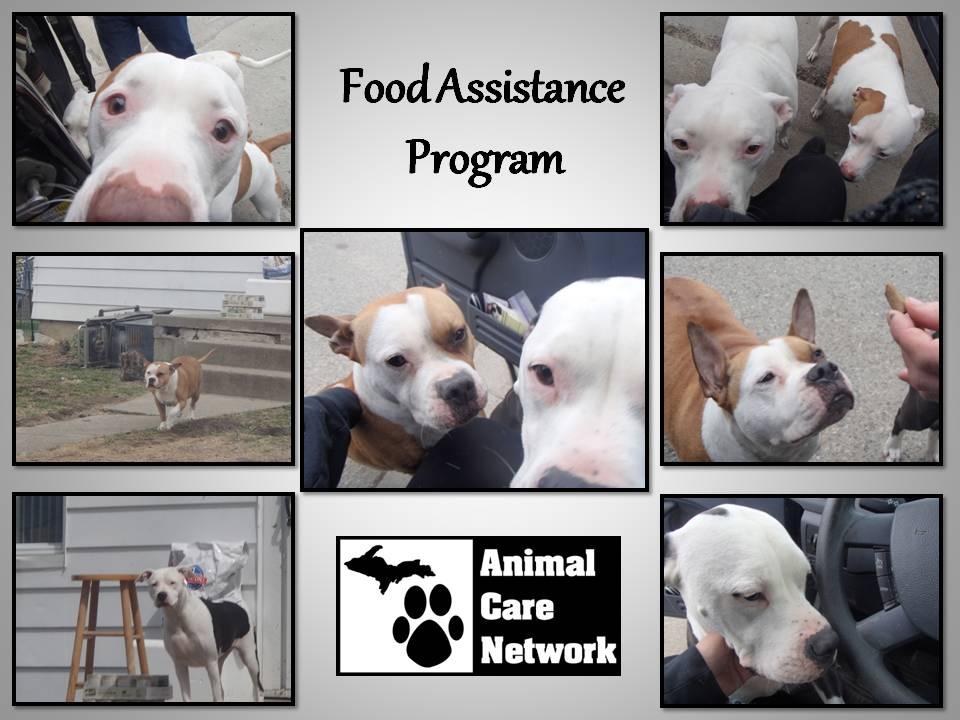 Food assistance pit bulls