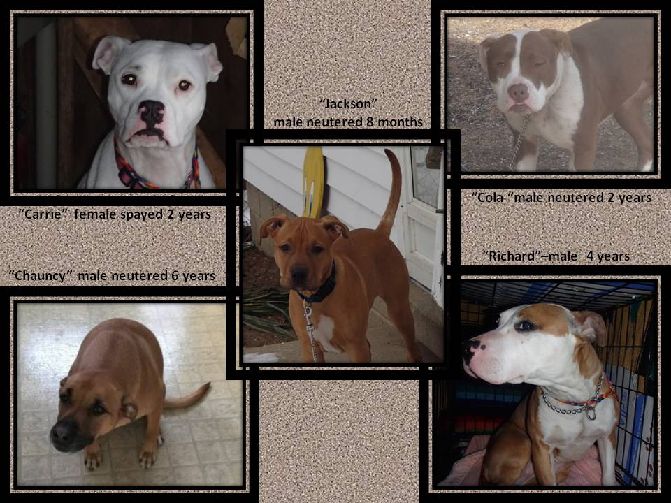 PIT BULL RESCUES 4-2015