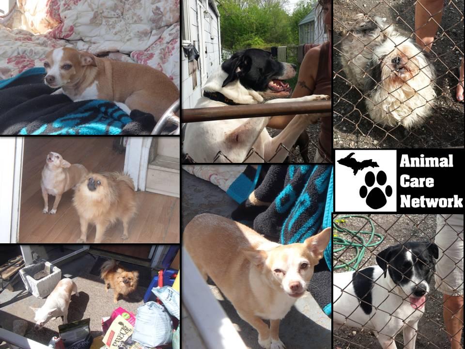 multiple pet households
