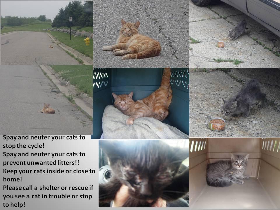 CAT RESCUES 6-2015
