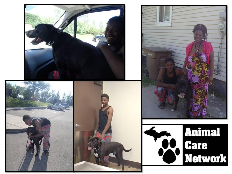 MHS Free spay pit bull program vontae