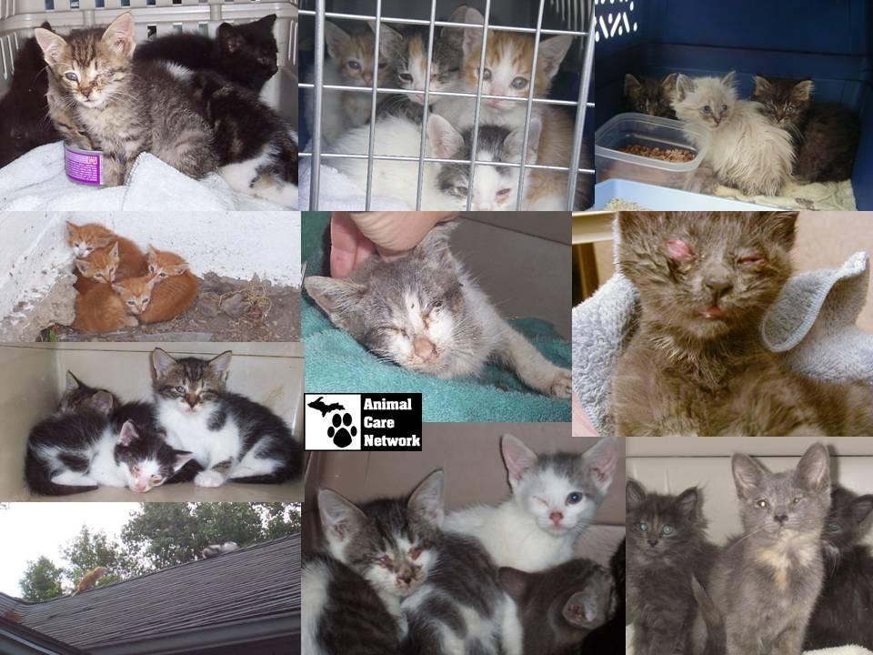 SPAY NEUTER CATS UNWANTED SICK KITTENS