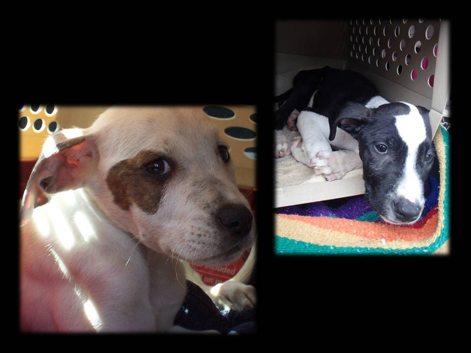 parvovirus another week of innocent lives lost