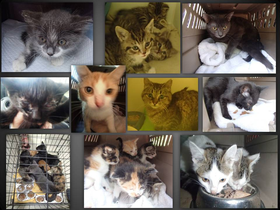 CATS AND KITTENS 8-2015