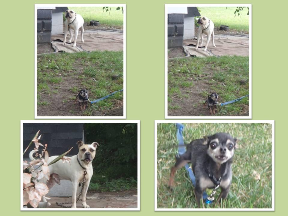 JACQ AND CODY 8-2015