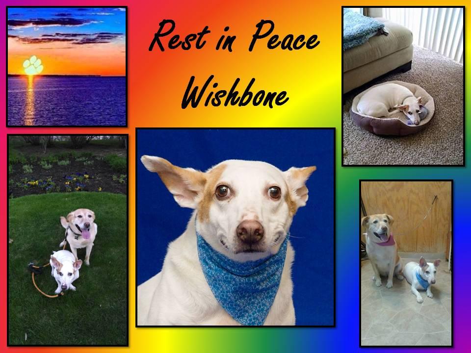 wishbone memorial