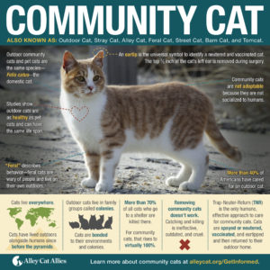 communitycatposter-copy