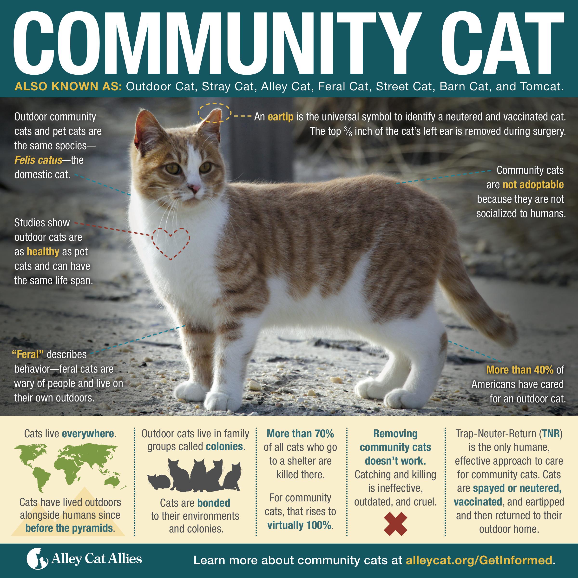 mating season for cats